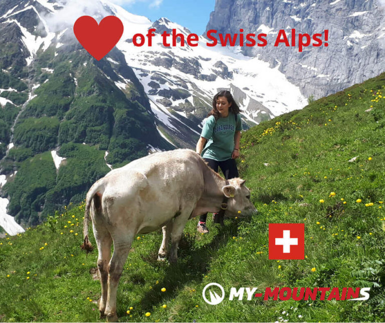 Read more about the article Heart of the Swiss Alps